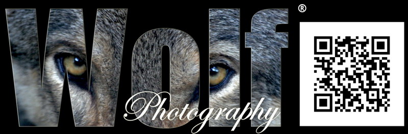 www.wolf1964.co.uk Contact Me