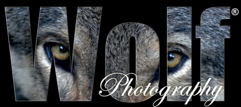 Wolf Photography - IP